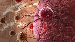 Células de cáncer en 3D.