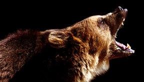La rabia es una enfermedad viral grave que se da principalmente en animales como los murciélagos, lobos y perros, e incluso en las mascotas.