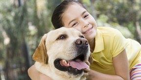 La pomada de terramicina (oxitetraciclina) es un medicamento recetado que se prescribe para el tratamiento de infecciones oculares en perros y gatos.