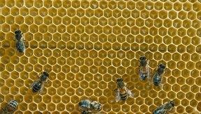 Crea una crema facial humectante casera a partir del panal de las abejas.