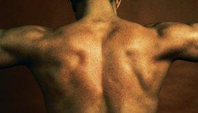 La testosterona juega un papel clave en el desarrollo de los tejidos reproductivos masculinos como también la promoción de los caracteres sexuales secundarios.