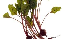Las hojas de remolacha proporcionan sabor, vitaminas y fibra..