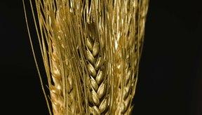 El gluten es una proteína que se encuentra en la cebada, el centeno y el trigo.