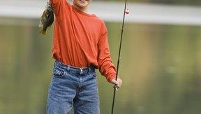 Las mojarras están entre los peces más fáciles de atrapar una vez que encuetras donde se congregan.