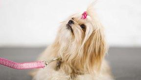 Elimina el pelo de tu perro o de tu gato manteniendo bien acicalada a tu mascota.