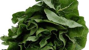 La espinaca es una fuente natural de CoQ10.