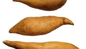 El extracto de batata salvaje se usó para crear las primeras pastillas anticonceptivas.