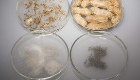 Las alergias a ciertos alimentos pueden provocar la liberación de histamina.