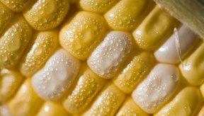 El maíz dulce aporta vitaminas B y vitamina C.