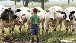 Las enzimas digestivas de origen animal a menudo provienen de las enzimas pancreáticas o del estómago de las vacas.