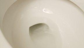 Al ser vitamina soluble en agua, el exceso se desecha por la orina.