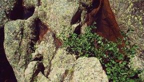 Los escaladores pasan mucho tiempo balanceándose sobre pequeños puntos de apoyo.