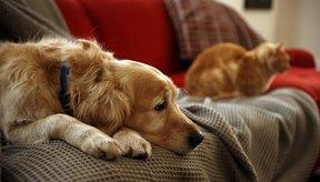 Un gigantesco 80% de las mordidas de gatos se infectan si no se tratan, en comparación con el 3 a 18% de las mordidas de perros.