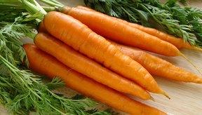 Manojo de zanahorias.