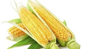 El maíz GMO es la planta más común.