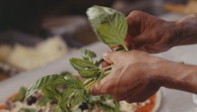 Usar hojas de albahaca frescas o secas en la cocina es seguro para las mujeres embarazadas.