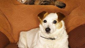 Evita un mayor daño manteniendo a tu gato dentro de casa.