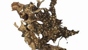 Crea una crema exfoliante aromática en casa con hierbas secas.