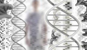 La niacina repara el ADN.