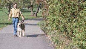 Caminar al aire libre te permite disfrutar de la luz del sol, el aire fresco y la naturaleza.