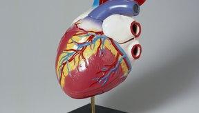 Para ayudar a reducir el riesgo de enfermedades del corazón en general, se recomienda consumir de 5 a 10 gramos o más de fibra soluble al día.