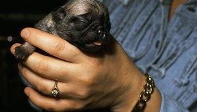 La descarga verde después del primer cachorro se considera normal.