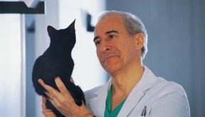Lleva tu gato al veterinario si presenta piel roja y con costras con pérdida de pelo.