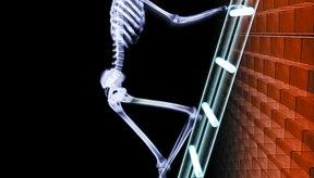 El sistema esquelético junto con el muscular permiten el movimiento del cuerpo.