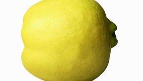 El membrillo es una fruta amarilla y aromática.