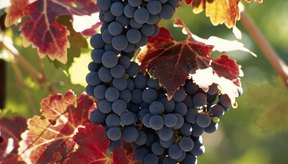 El contenido calórico del vino puede variar dependiendo del tipo de uva utilizado.