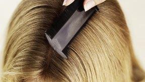 Limpia todos los cepillos de cabellos, ya que los piojos son contagiosos.