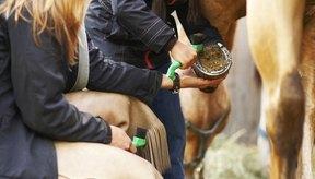 Verifica cualquier síntoma de sarna en tu caballo para tratarla a tiempo.