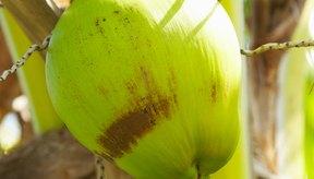 El agua de coco es una bebida completamente natural y alta en potasio.