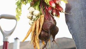 Las remolachas y las zanahorias son adiciones saludables a tu dieta.