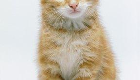 Existen muchos trastornos neurológicos que afectan a los gatos.