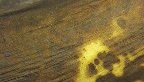 Una vez que un banano se pela y corta, comenzará a ponerse marrón