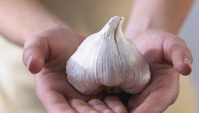El ajo, o Allium sativum, es uno de los condimentos básicos de la cocina mediterránea con efectos medicinales sobre el organismo.