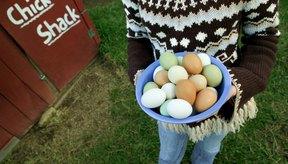 Los huevos son una fuente excelente de vitamina B5.