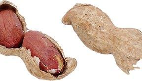 Las alergias a los cacahuates pueden durar toda la vida.