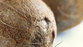 El coco es especialmente rico en fibra, con 1 taza de pulpa conteniendo 7,2 gramos.
