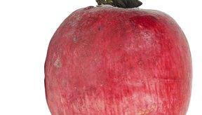 Las remolachas encurtidas pueden almacenarse más tiempo que las recién cosechadas.