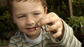 El uso de gusanos es muy común en la medicina.