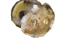 Las ostras son altas en zinc.