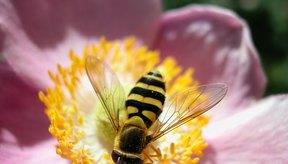Una abeja.