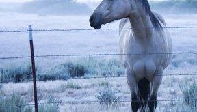 Los animales demacrados pueden recibir tratamiento con Stanozolol.