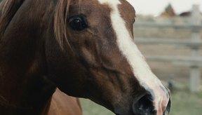 Cómo detener la diarrea en un caballo.