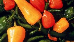 Los pimientos serranos están entre los más picantes de las muchas variedades de chliles pimientos.