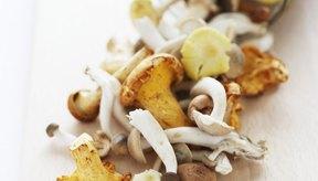 Todos los tipos de hongos contienen vitamina D.