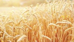 Puesta del sol sobre campo de trigo
