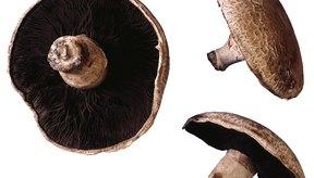 Las setas, o champiñones, portobello de bajas calorías están rellenas de cobre y selenio.